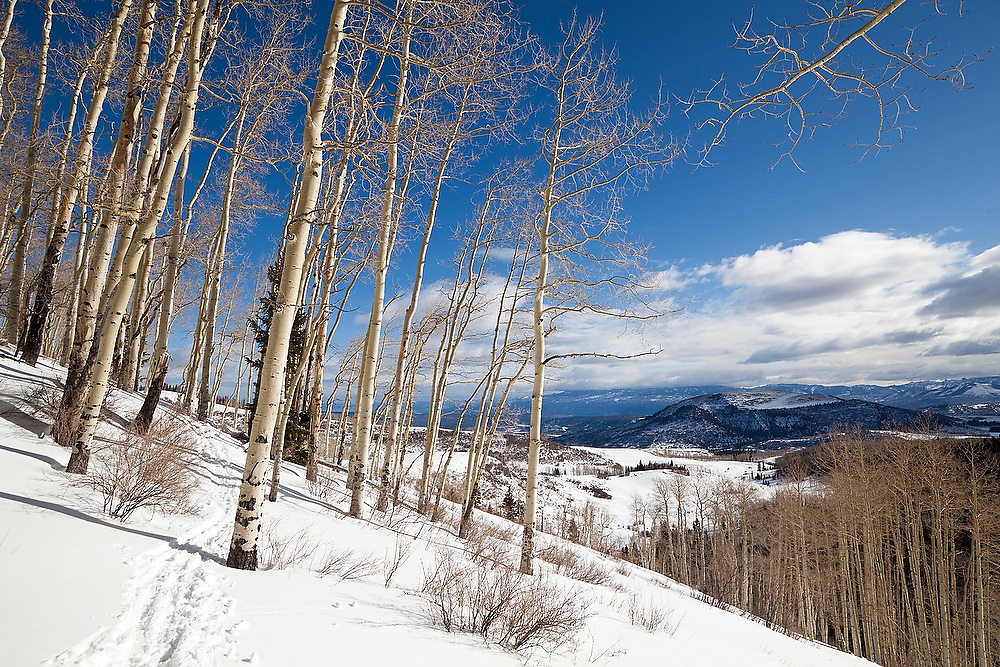 View south towards the plains from an open aspen grove in Uncompahgre National Forest, Colorado.