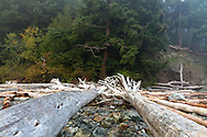 Driftwood and tree stumps on the rocks at Whytecliff Park beach in West Vancouver, British Columbia, Canada