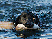 Tony Osborne calling ducks while hunting in Shamrock, Oklahoma