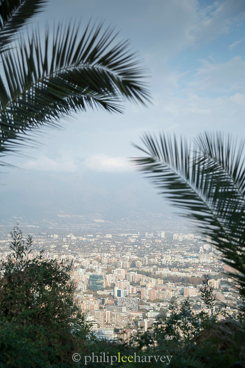 View of city palm trees, sky and horizon, Santiago, Chile