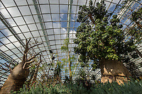 Baobab at Singapore Flower Dome -both spectacular and innovative at the same time.  It is the largest greenhouse in the world with changing displays of flowers and plants.  Not only is the place interesting and education but it is cool inside!  The Flower Dome replicates the cool and dry climate of Mediterranean regions so visitors can discover both the beauty of these plants and flowers, as well as how they adapted to their cool & dry environments.