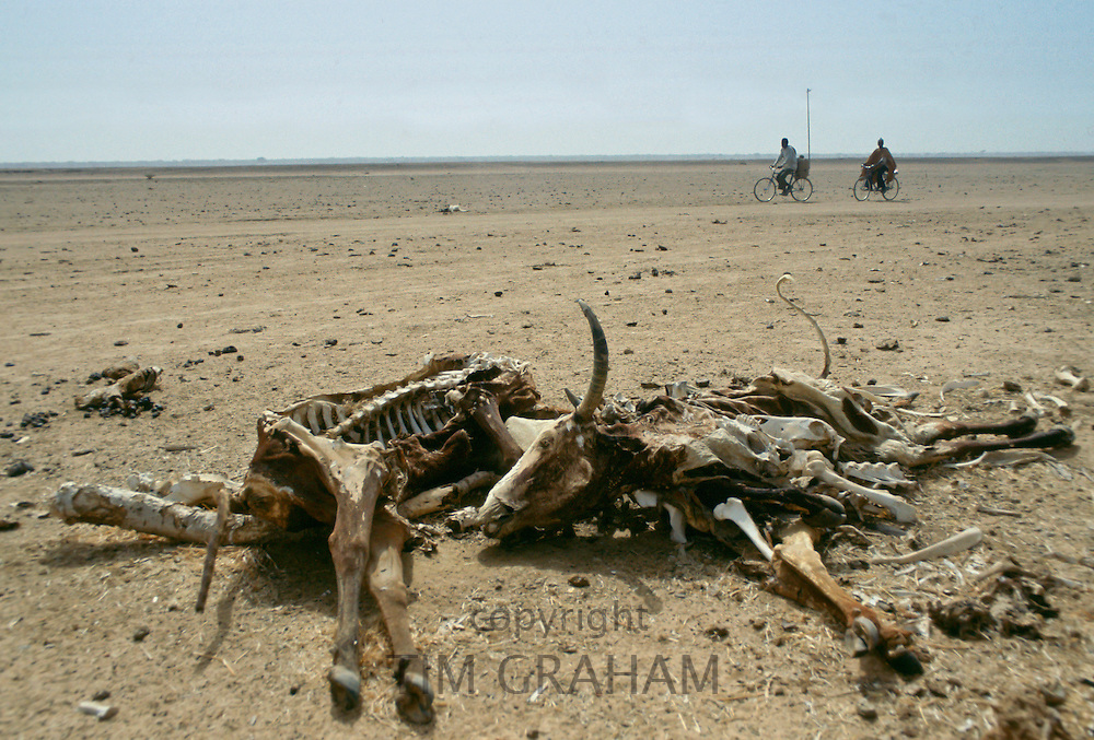 Locals on bicycles ride past carcasses of the bones of dead animals in the drought areas of Burkina Faso (formerly Upper Volta)