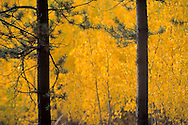 Fall colours in the Yukon.