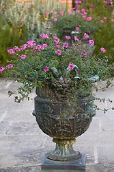 Verbena 'Sissinghurst' in an urn at Sissinghurst Castle