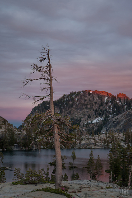 """""""Paradise Lake Sunset 5"""" - Photograph of a dead pine tree at Paradise Lake in the Tahoe National Forest taken at sunset."""