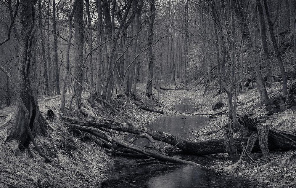 Mill Race Trail in Rain, Oella, Maryland.