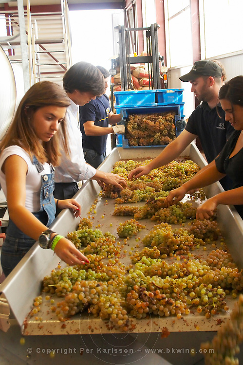 antao vaz grape sorting table herdade das servas alentejo portugal