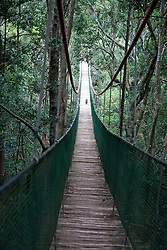 Howler Monkey crossing the suspension bridge, South Africa