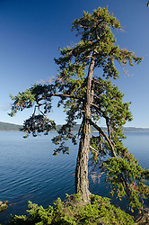 Tree at Panther Point, Wallace Island, Gulf Islands National Park Reserve, British Columbia, Canada