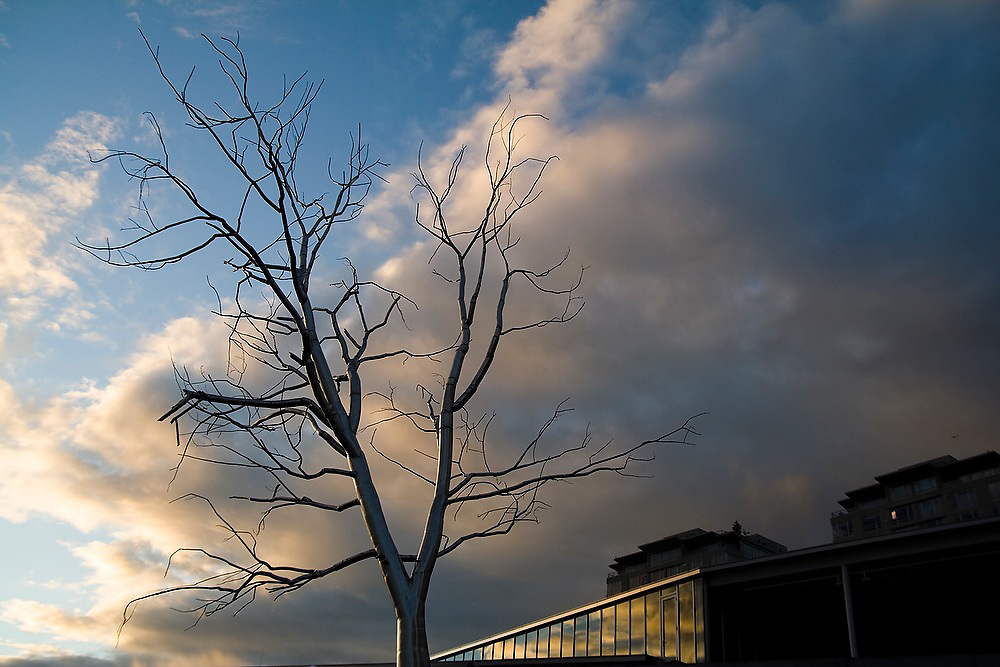 "Roxy Paine's ""Split"" tree sculpture at the Seattle Art Museum Olympic Sculpture Park in Seattle, Washington."