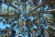 The last forested area you walk through on the way to Snow Mountain is called The Black Forest.  It's a pristine pine forest with tall trees and an unspoiled environment.