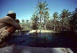 Date Palm oasis irrigation well, Eastern Province, Saudi Arabia.