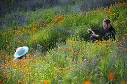 March 23, 2019 - Lake Elsinore, California, U.S. - Julie Waggoner of San Diego is photographed by husband Benoit Bouvard at the superbloom Lake Elsinore trail. Road closure at Lake St. and shuttles are keeping the crowds under control on Saturday March 23, 2019. (Credit Image: © Cindy Yamanaka/SCNG via ZUMA Wire)
