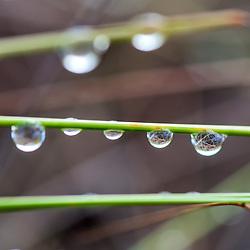 """""""Gotas de orvalho (Paisagem) fotografado em Guarapari, Espírito Santo -  Sudeste do Brasil. Bioma Mata Atlântica. Registro feito em 2008.<br /> <br /> <br /> <br /> ENGLISH: Dew drops photographed in Guarapari, Espírito Santo - Southeast of Brazil. Atlantic Forest Biome. Picture made in 2008."""""""