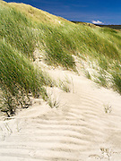 Grass and other dune plants stabilize the high sand dunes on the beach at Mason Bay, Stewart Island (Rakiura), New Zealand.