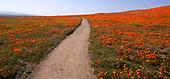 Mar 25, 2019-News-Antelope Valley California Poppy Reserve