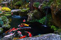 Japon, île de Honshu, région de Kansaï, Kyoto, jardin zen // Japan, Honshu island, Kansai region, Kyoto, zen garden