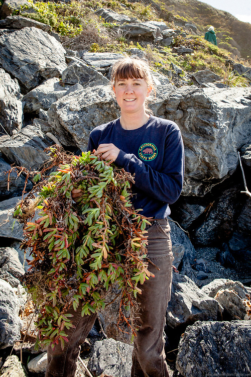 California State Parks Intern Mae McLean, poses with a load of invasive iceplant she has removed from the coastal bluffs, a side benifit of Operation Free the Dudleya.