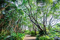 Kirstenbosch National Botanical Garden, Cape Town, South Africa.
