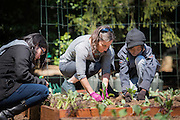 Debra Kane, head of the USDA's Farm to School Program and Endya, her garden helper from New Orleans, plant vegetables in the White House Kitchen Garden.