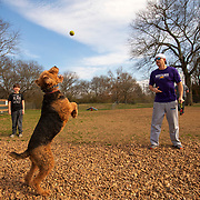 """Adam Willingham throws a ball to """"Winston"""" as Brantley watches at the Spring Hill Bark Park in Spring Hill, Tennessee. Nathan Lambrecht/Journal Communications"""