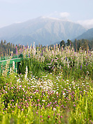 Countryside in the hills of Gulmarg, Kashmir, India