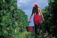 Grape harvest-Chateau Figeac, St. Emilion© Owen Franken.....