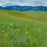 Bean Lake Road on Montana's Front Range. A great place to see wildflowers and wonderful cloudscapes.