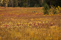 "Autumn colors the Takh Takh Meadow Gifford Pinchot National Forest in Washington state's Cascade Mountain Range near Mount Adams. (""Takh Takh"" is a Taidnapam/Yakama word meaning ""small Prairie"")"