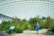 Tourist views exotic plants among horticultural exhibits in The Great Glasshouse of the National Botanic Garden of Wales, UK