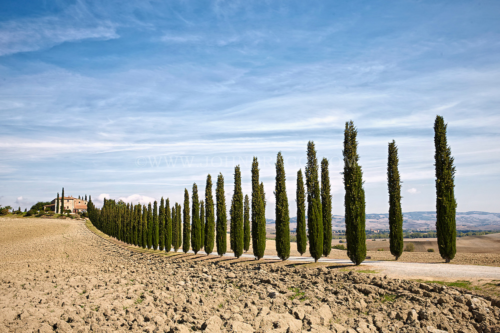 Cypress trees add drama to a villa driveway in Val d'Orcia in Tuscany, Italy.