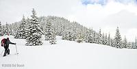 Cross Country Skier on the Mount Tahoma Trails near Mount Rainier, Cascade Mountain Range, Washington, USA