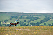 Galloping up the 7 furlong in Middleham.
