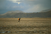 An Uru Murato fisherman returns from a fishing trip with the catch in a wooden box strapped to his back at Lago Poopo, the Altiplano, Bolivia. He walks over the dry bed of the partially dried up lake.