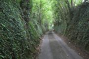 Deep banks of ancient narrow road in sunken lane, Batheaston, Somerset, England, UK