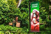 Interpretive sign at the orangutan exhibit, Singapore Zoo, Singapore, Republic of Singapore