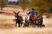 Mier Family on mule pulled trap near the Kagalagadi Transfrontier Park