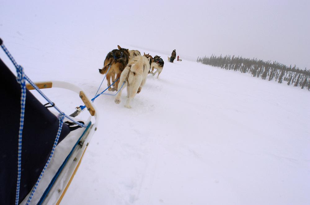 Alaska. Iniakuk Lake. Dog musher enjoys an outing with Brooks Range in background. MR.