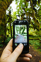 Taking an iphone photo of the Hall of Mosses in the Hoh River Rain Forest. Olympic National Park, WA