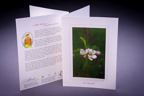 Learn about the special relationship between the apple blossom and the honey bee, and how an apple develops. <br /> <br /> Artemis Photo Greeting Cards featuring NH native flora and fauna and historic sites. The cards are made exclusively in NH made from 100% FSC recycled paper, manufactured with wind and water power, and are archival acid free paper. Each card includes details on the back about the image, including interesting anecdotes, historic facts, conservation status, and recipes.