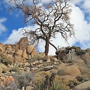 Desert Oak Large Rock Hill - Full Clouds