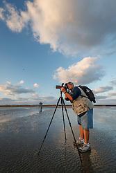 Sunrise silhouette of brown pelican against bridge, Galveston Bay, Galveston, Texas, USA