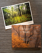 Forest for the Trees book with Print #2