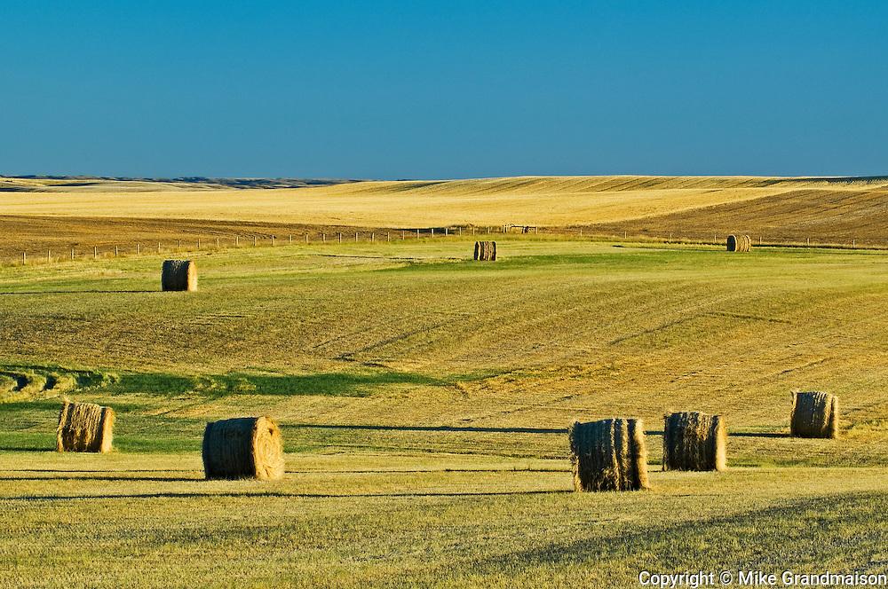 bales at sunrise<br /> near Grasslands National Park<br /> Saskatchewan<br /> Canada