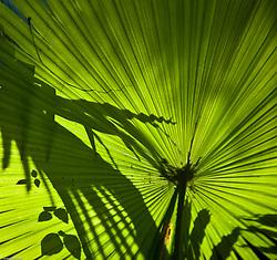 Pattern on a Green Leaf, Ubud, Bali, Indonesia.