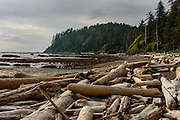 The logs were piled like thrown linclon logs.  The storm surges must have been impressive to push these logs up on the beach and stack them on top of each other.  Can you imagine what it might have looked like?