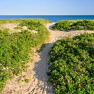 Path to Beach, Hither Hills, Montuak, NY