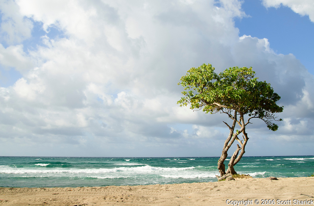 A single tree sits along the Pacific Ocean on the northwestern area of Oahu, Hawaii.