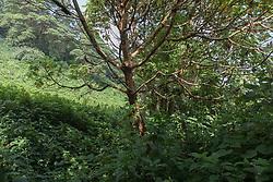 Cool Tree On Gorilla Treck
