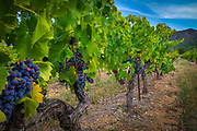 Côtes du Luberon is a French wine-growing AOC in the southeastern extreme of the Rhône wine region of France, where the wines are produced in 36 communes of the Vaucluse département. The neighbouring appellation of Côtes de Ventoux AOC stretches along its northern border and is separated by the Calavon river. The southern limit of the region is marked by the Durance river.